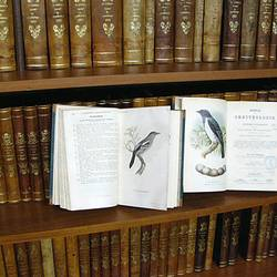 Blick in das Journal für Ornithologie